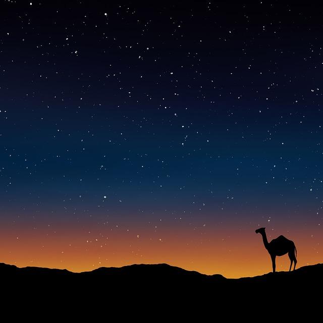 velbloud v noci.jpg