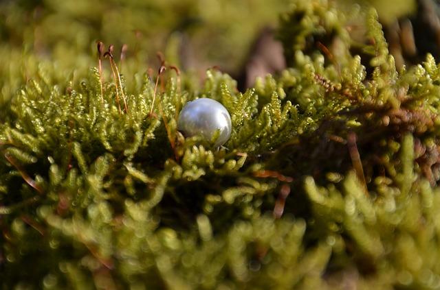 perla v trávě