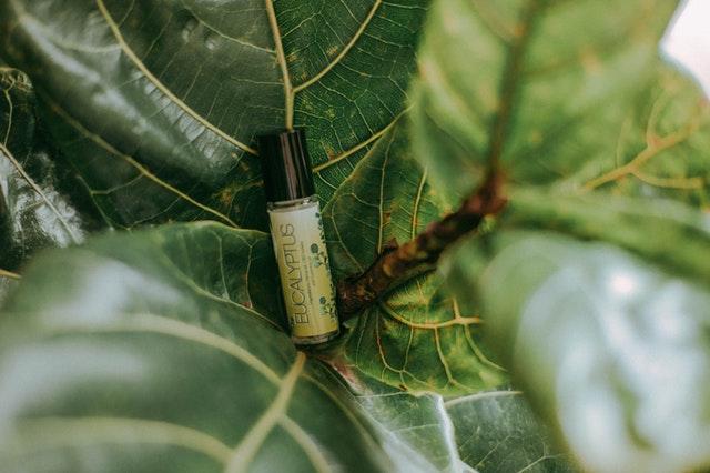 eukalyptus v lahvičce