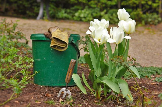 Kbelík se zahradnickým náčiním stojící u rozkvetlých tulipánů